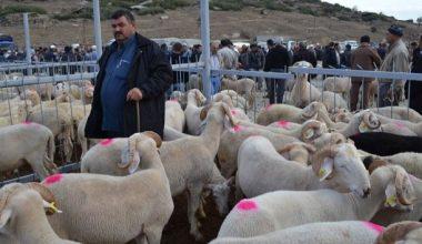 Manisa'nın Kula ilçesinde de hayvan pazarı kapatıldı